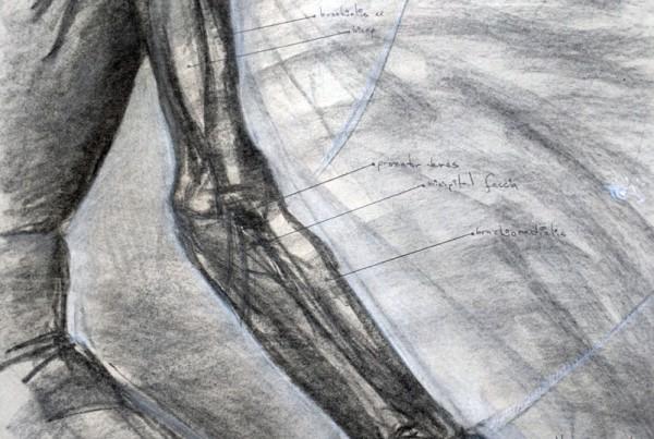 Amado-Arm-Study